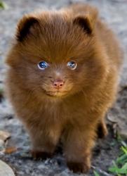 fluff pup